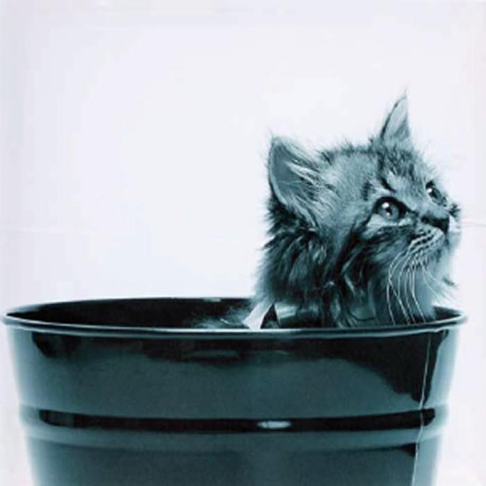 3 dielny obraz Cat 40x40 cm