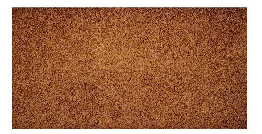 Elite Shaggy - koberec, 240x160cm (100%PP shaggy, hnedá)