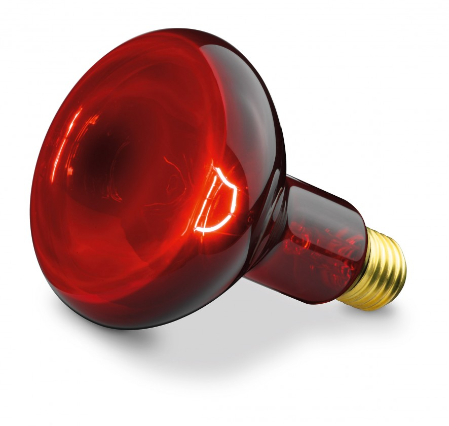 Halogénové žiarovky Náhradná žiarovka pre Beurer IL 11, 100W