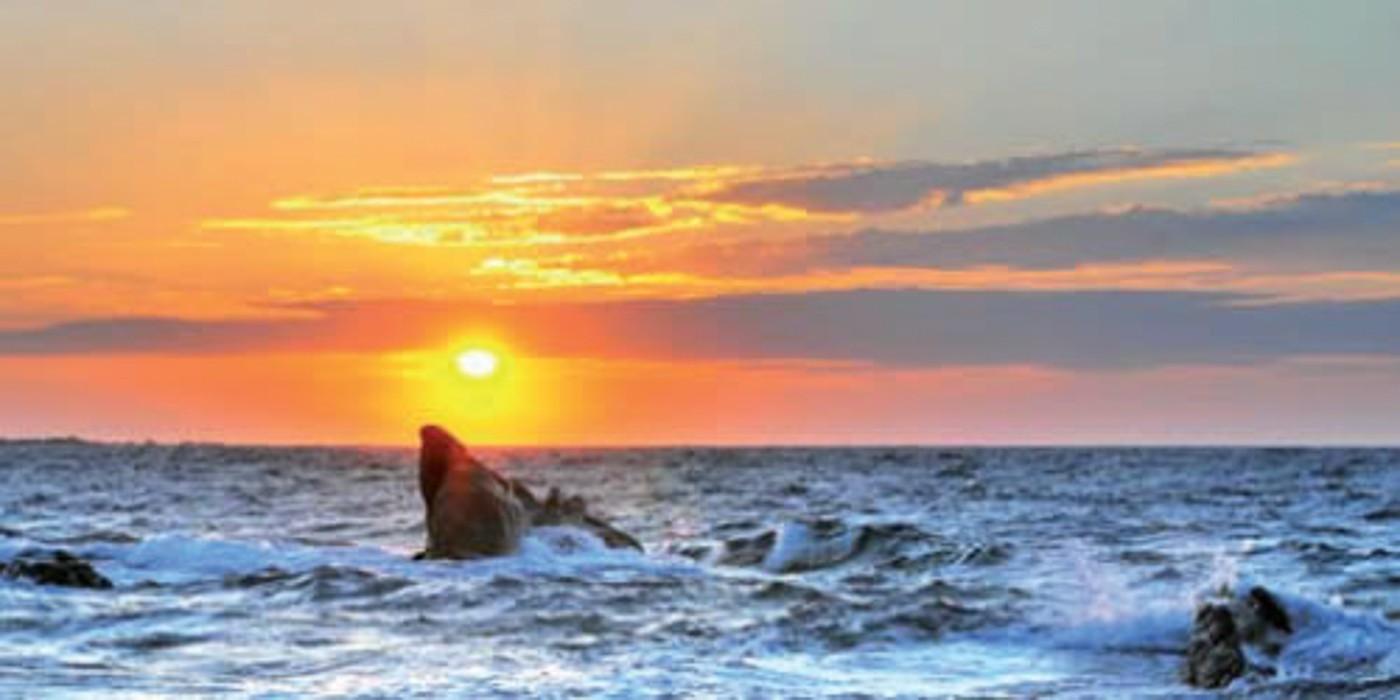 Obraz Sunset 50x100 cm