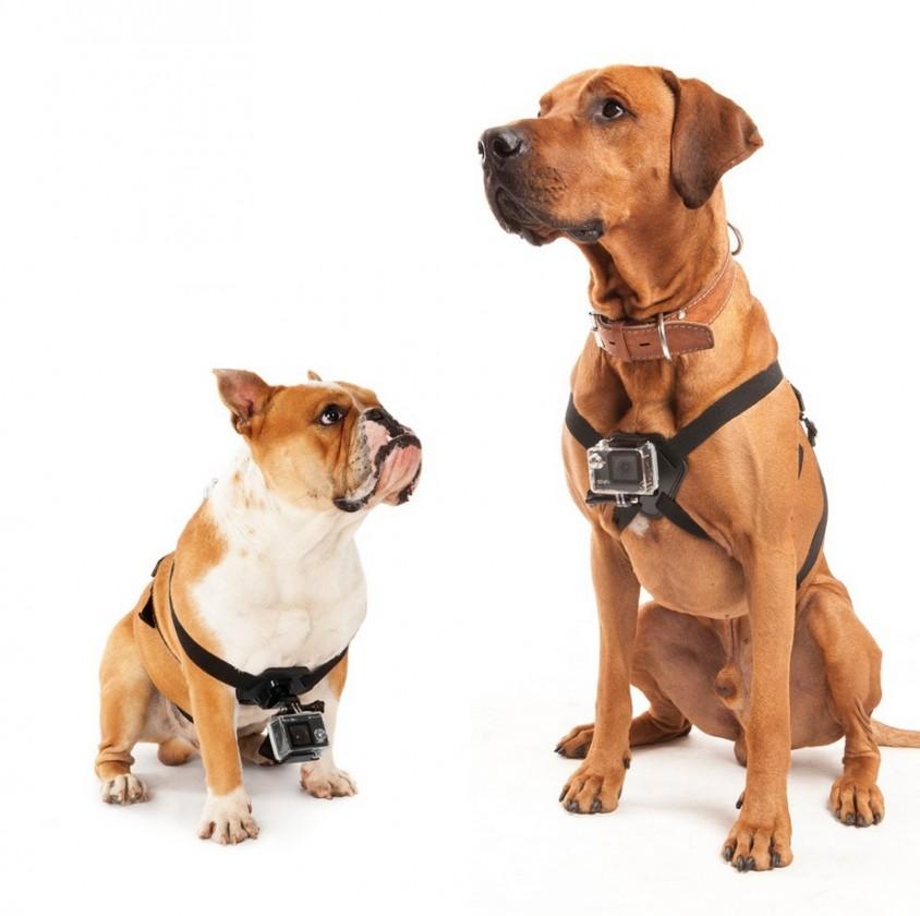 Príslušenstvo k outdoor kamerám MadMan Postroj na psa pro GoPro
